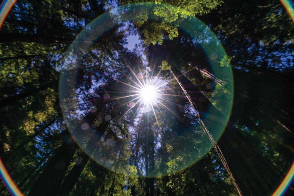 muir-woods-lens-flare-kristen-ryan.jpg