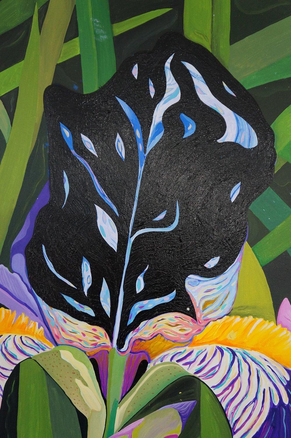 Black iris aug 31 '18.JPG