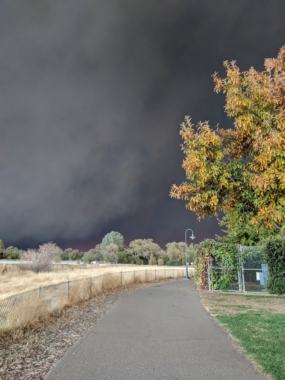 Alive in the Fire_Camp Fire Butte County (21).jpg