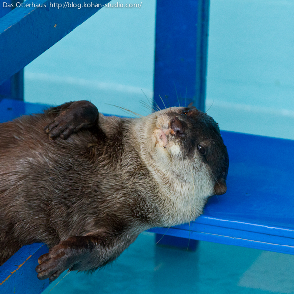 Otter Resists a Kiss But Gets One Anyway 4