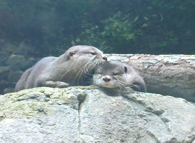 Just a Small Display of Otter Affection