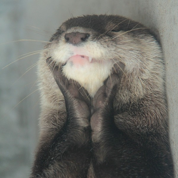 Delighted Otter Is Delighted