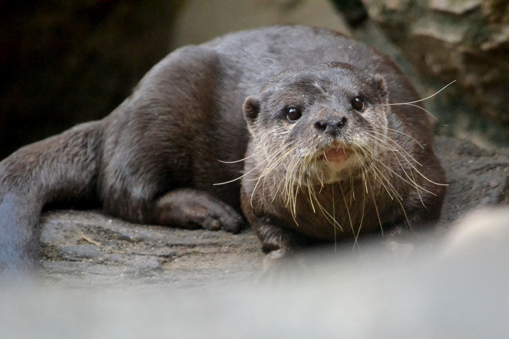 Those Are Some Whiskers Otter Has