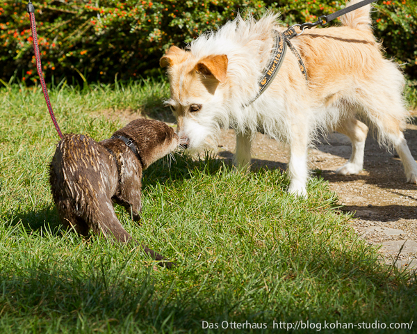 Germany's Otter Pup Nemo Makes Some Canine Friends 2