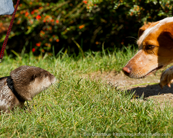 Germany's Otter Pup Nemo Makes Some Canine Friends 3