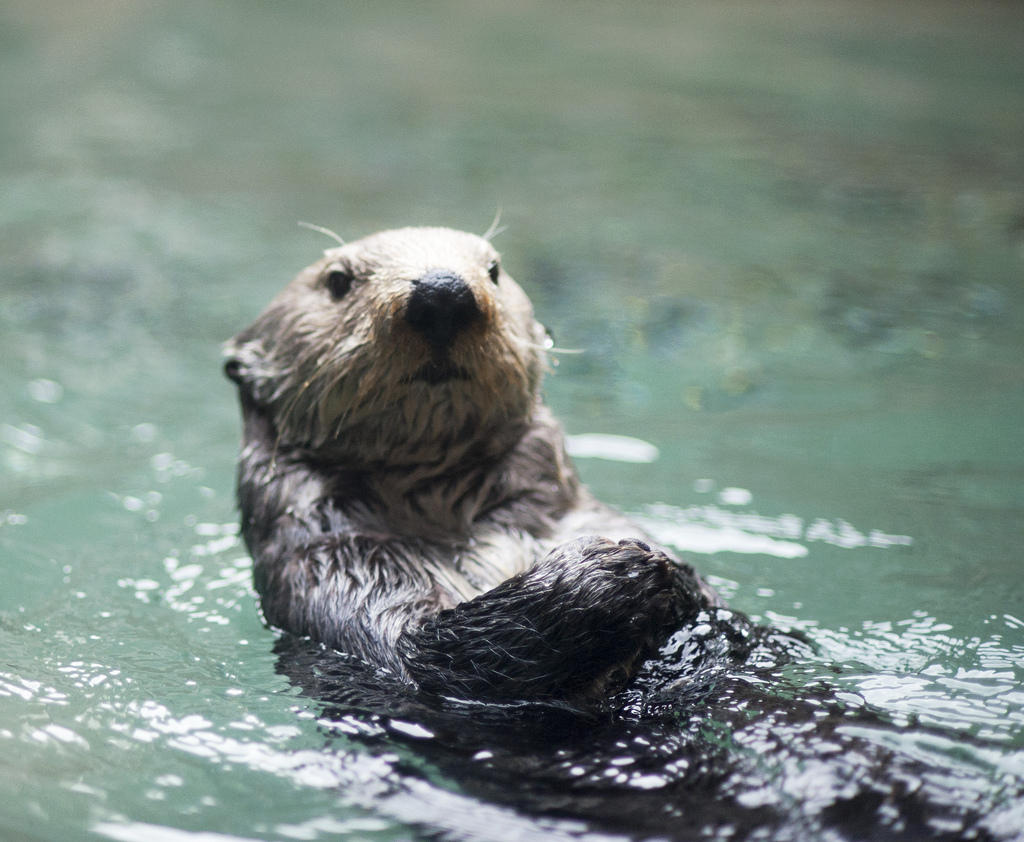 Hi! Want to Join Me for a Swim and a Snack?