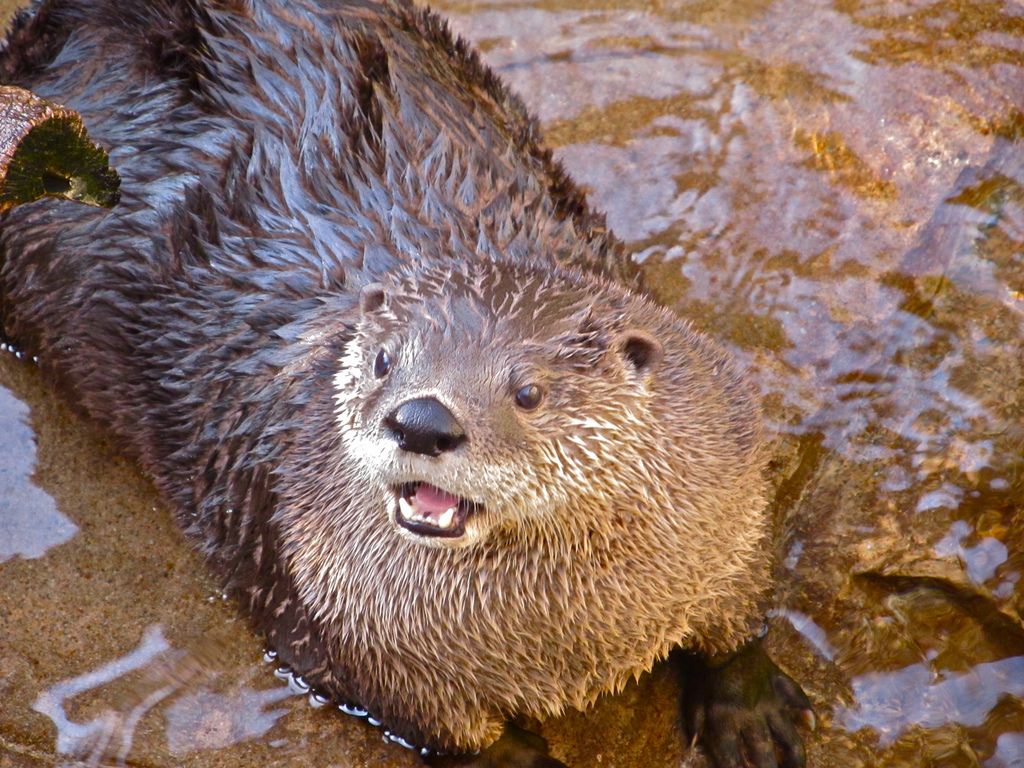 Otter Looks Shocked