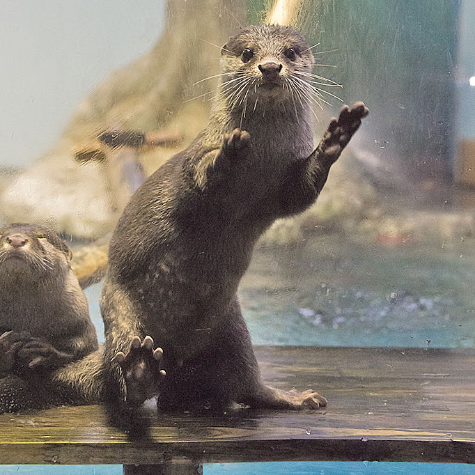 Photographer Has Caught Otter Mid-Dance