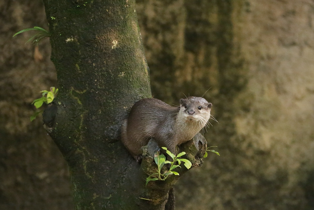 Otter Can See Far and Wide from His Perch