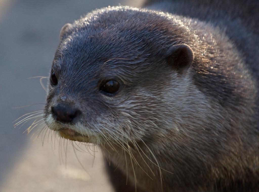 Otter Looks Pensive