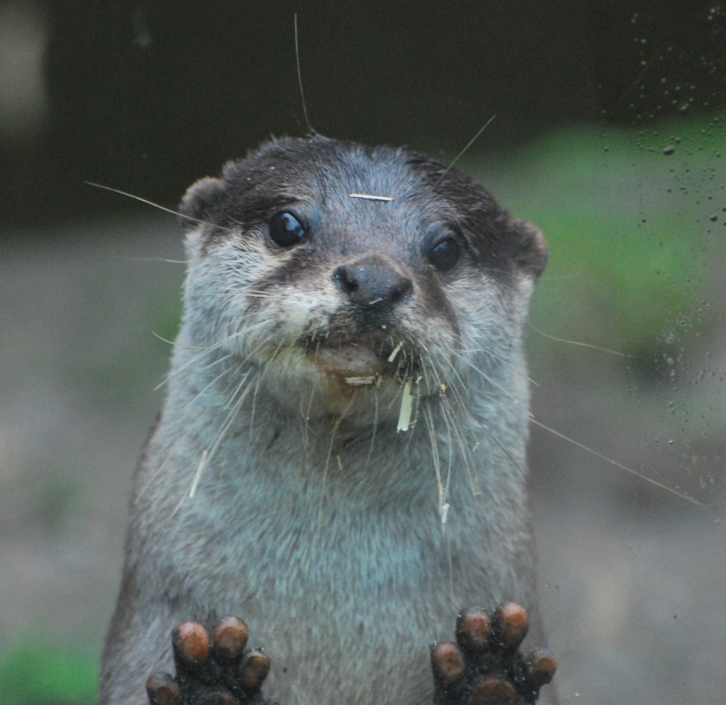 Otter Is Ready for Second Breakfast