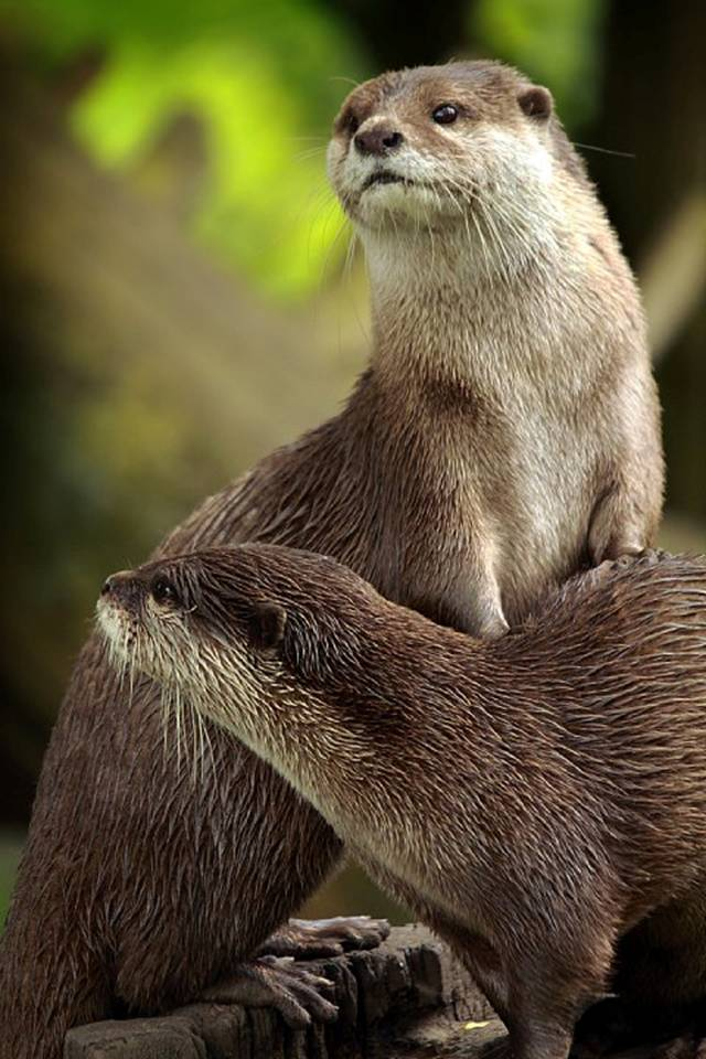 Otter Leans on a Friend to Get a Better Look