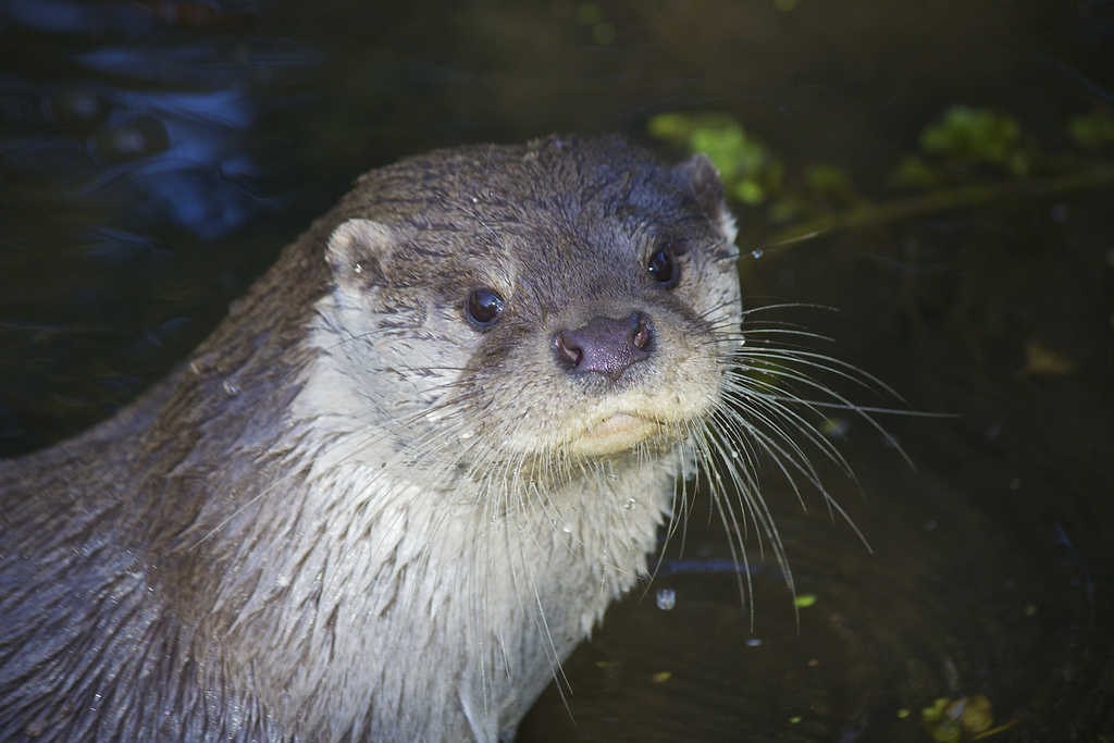 Photogenic Otter Is a Born Model