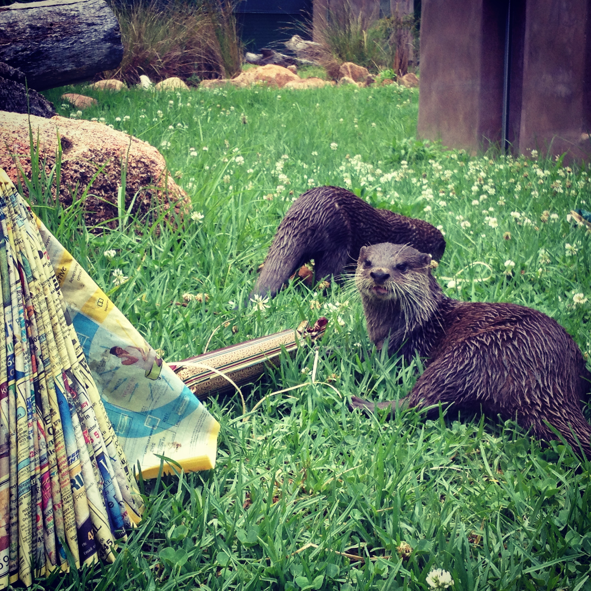 Otters Enjoy Cracker Treats Filled with Prawns and Boiled Eggs