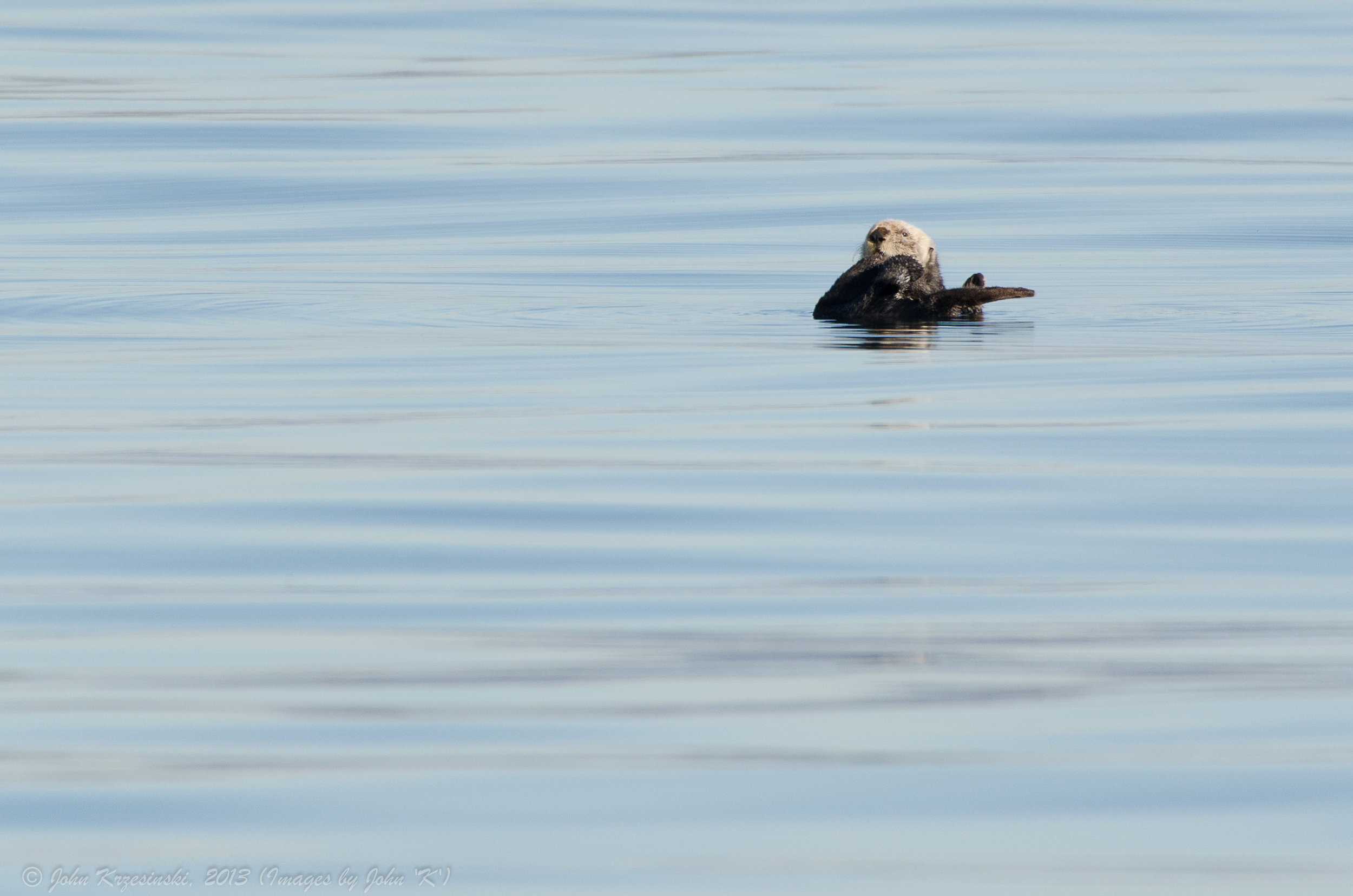 Otter Didn't Expect to See Anyone Else Out on the Water