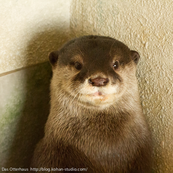 Otter Sits for His Picture to be Taken