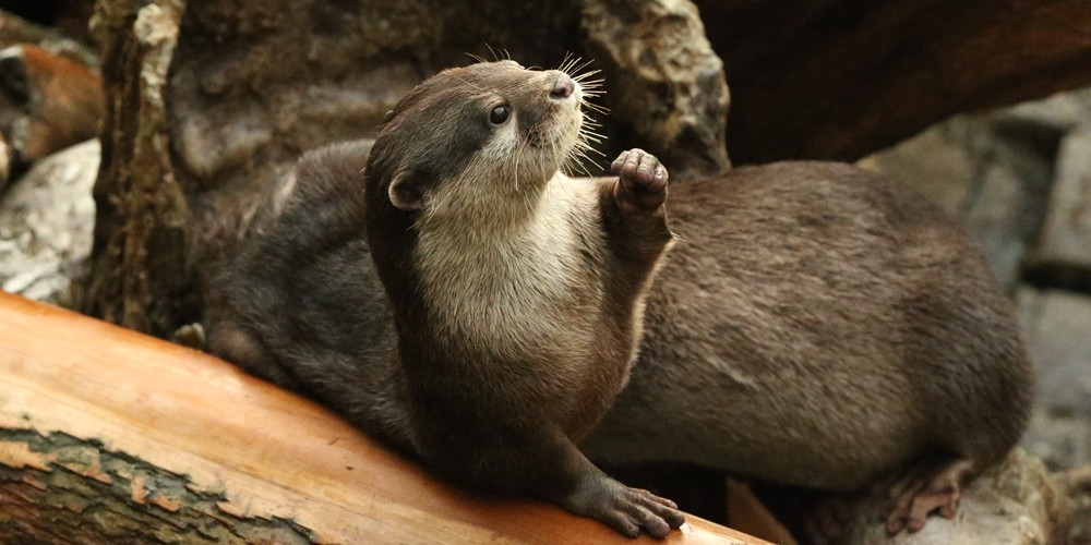 Power to the Otters!