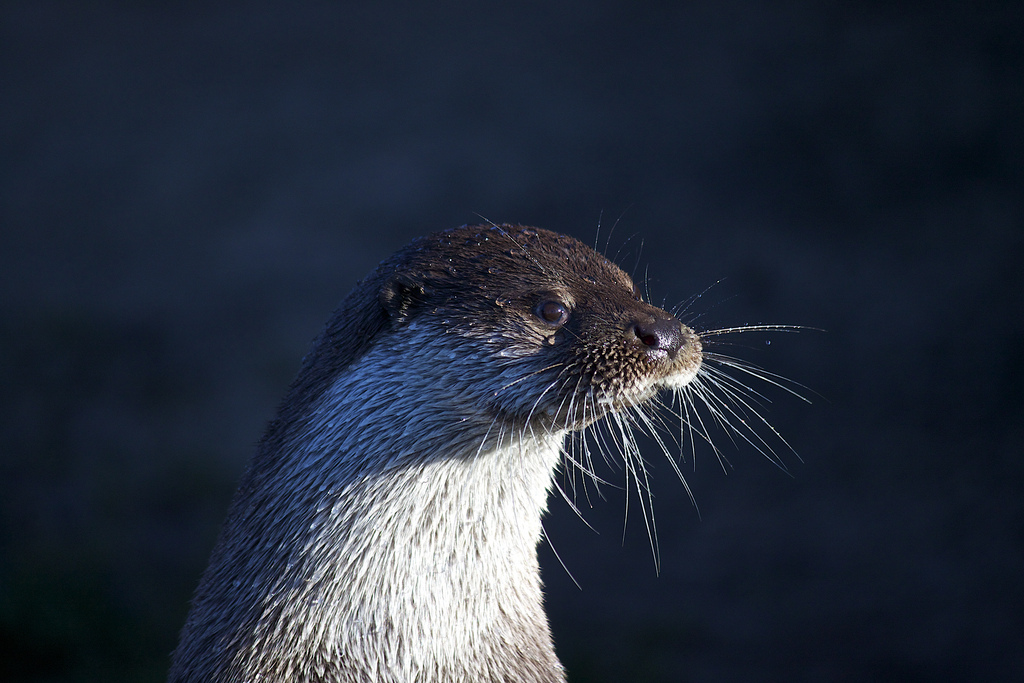In This Light You Can Count Otter's Whiskers