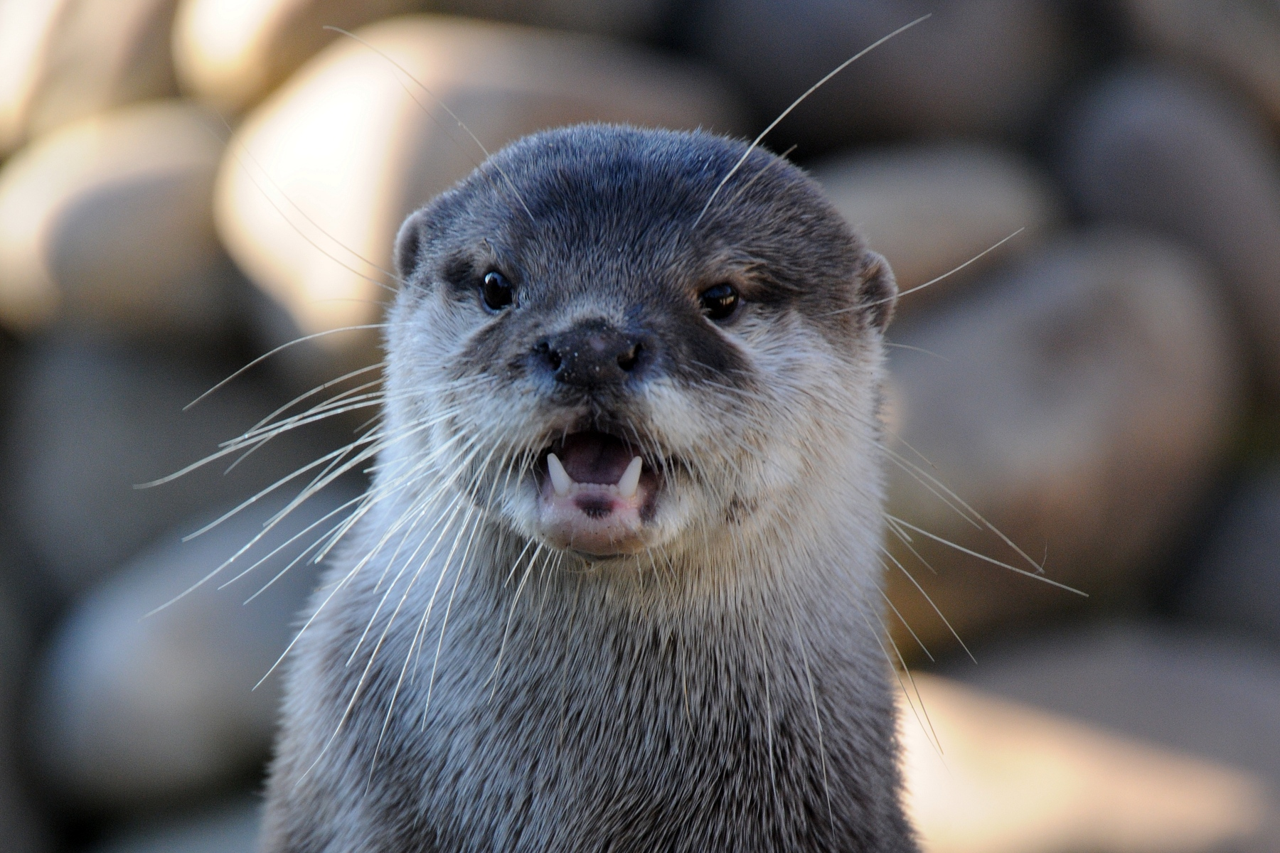 Otter Looks Like He Can't Believe What He's Seeing