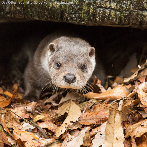 Otter Has Found a Cozy Spot to Curl Up In 2