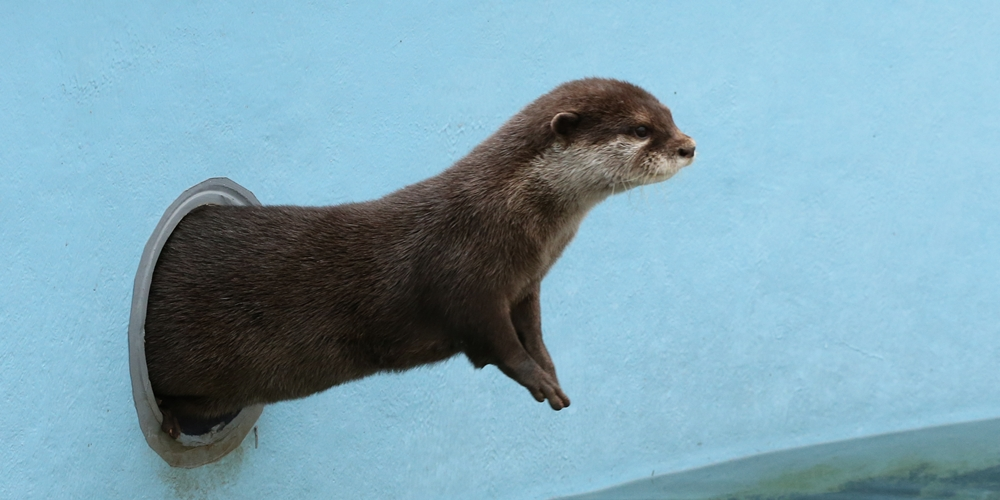 Otter Knows How to Make an Entrance 1