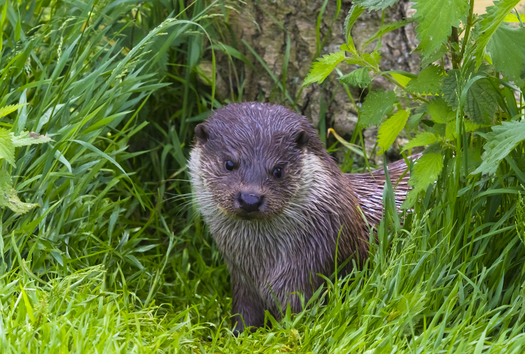 "Otter Gives the Paparazzi the ""Are You Kidding Me?"" Look"