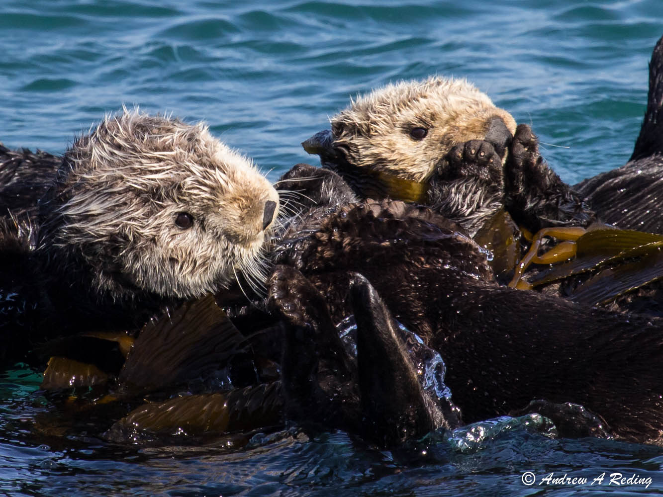 Sea Otters Have Never Looked Cuddlier