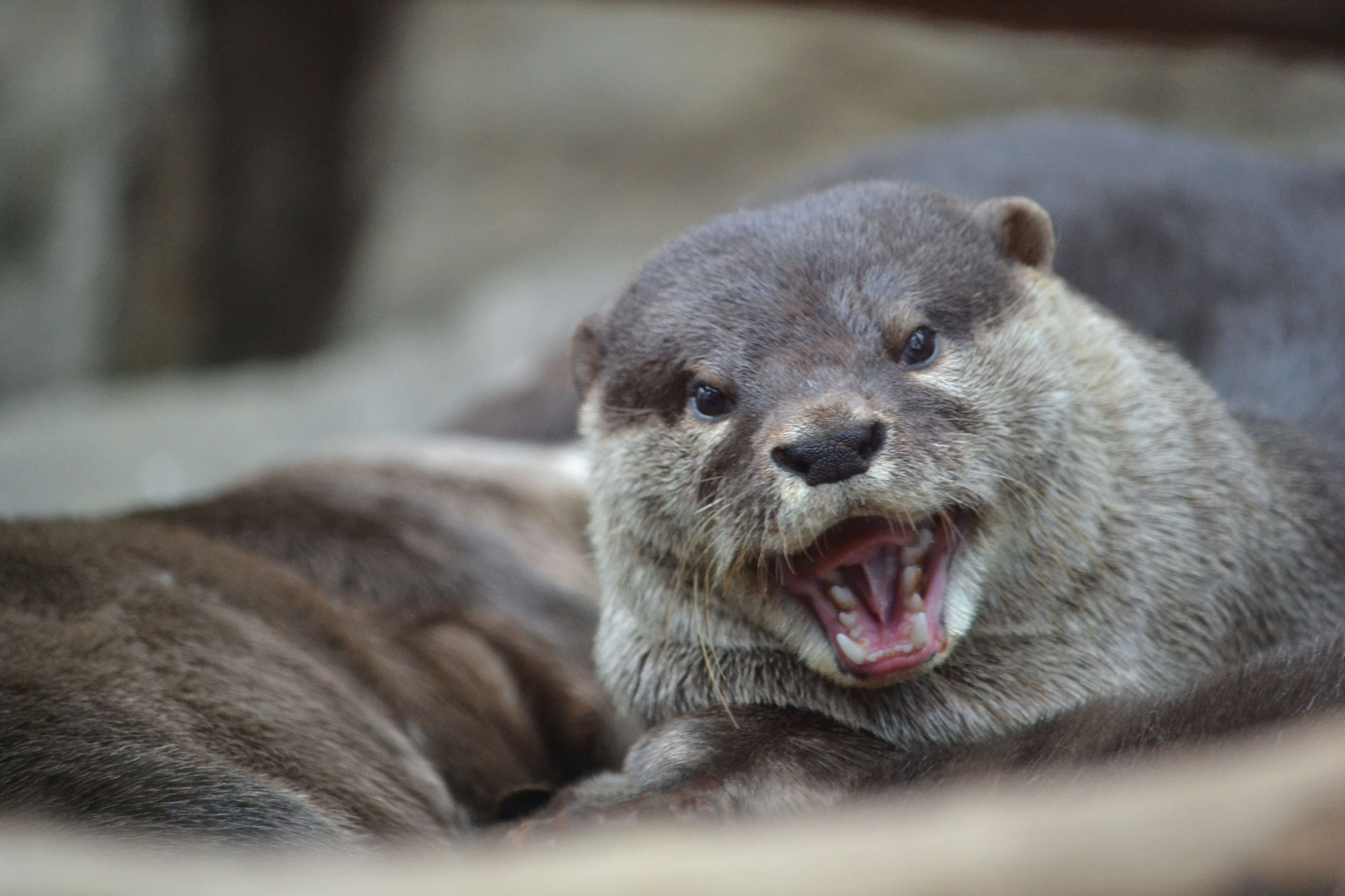 Otter Is Happy You're Here