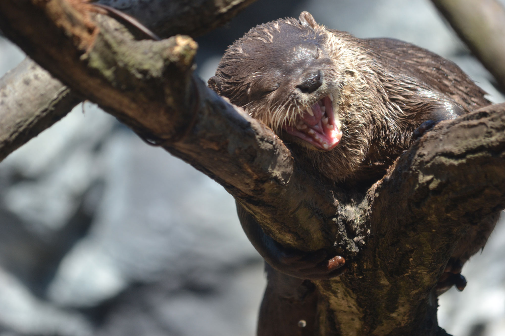 Otter Loves His Tree