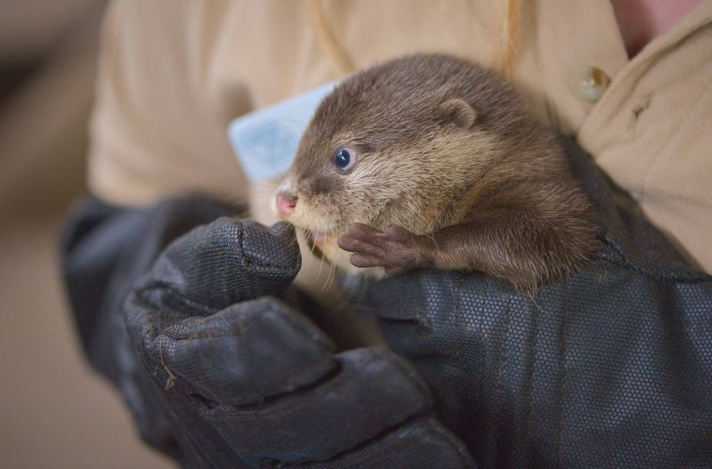 Otter Pup Gets a Boop on the Nose from Human's Glove