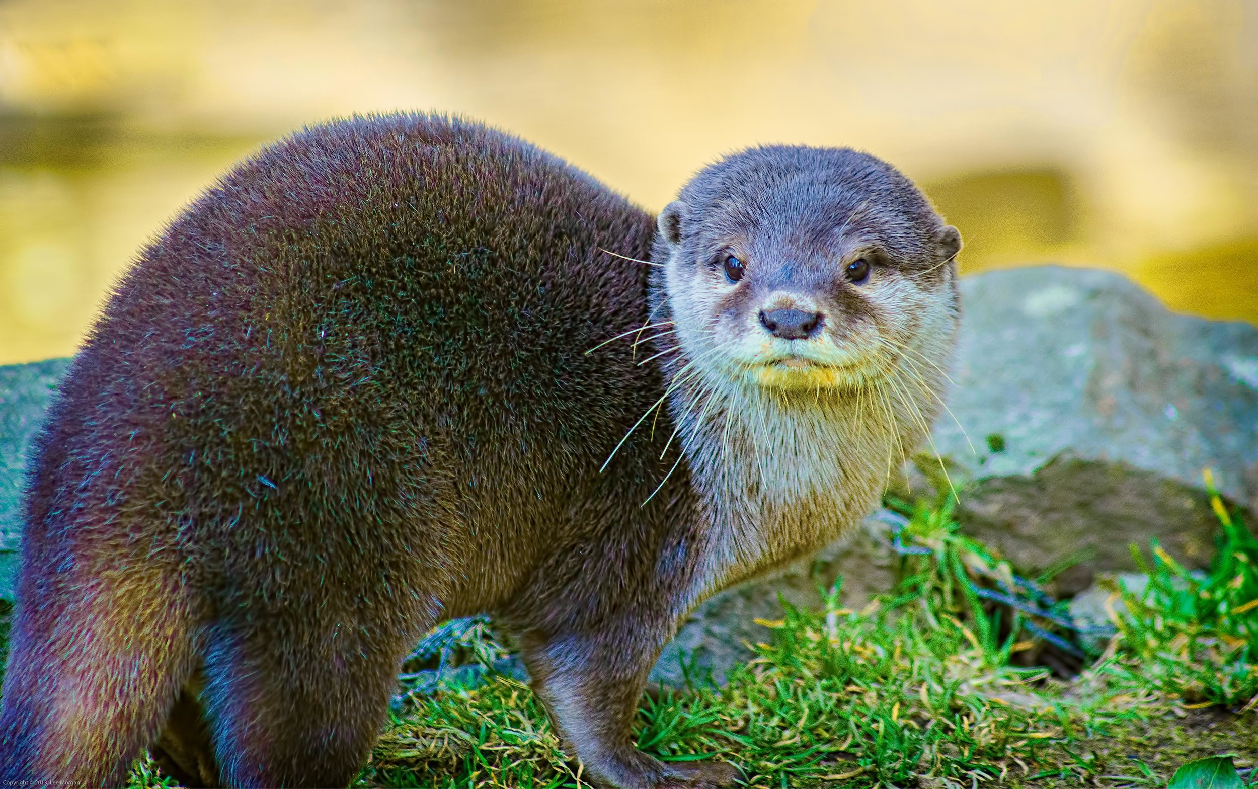 Model Otter Perfects Her Looking-over-the-Shoulder Pose