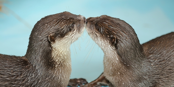 Otter Smooch