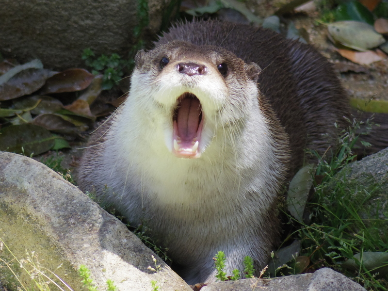 Otter Is at a Loss for Words