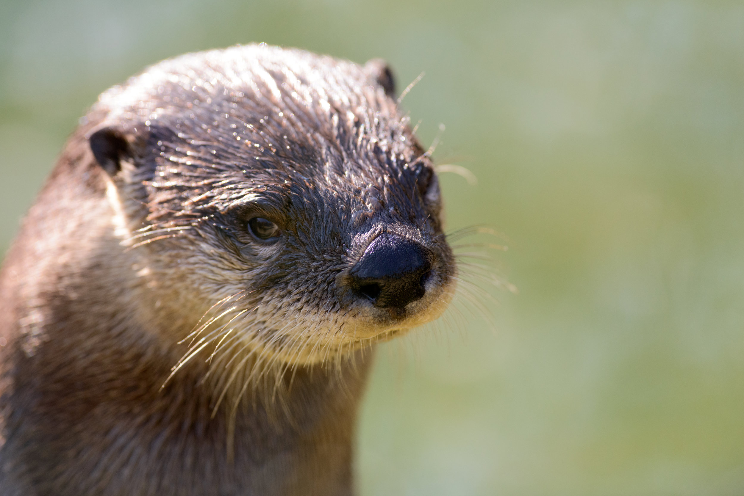 Otter Has No Patience for Bad Jokes