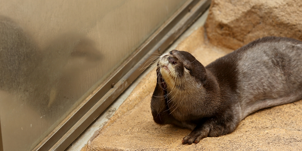 Otter Is Lost in Thought 2