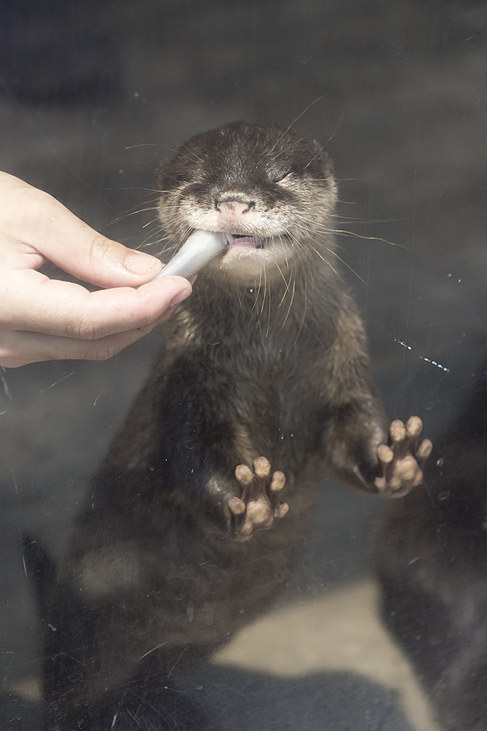It's Difficult Eating a Fish When You're an Otter Pup 4