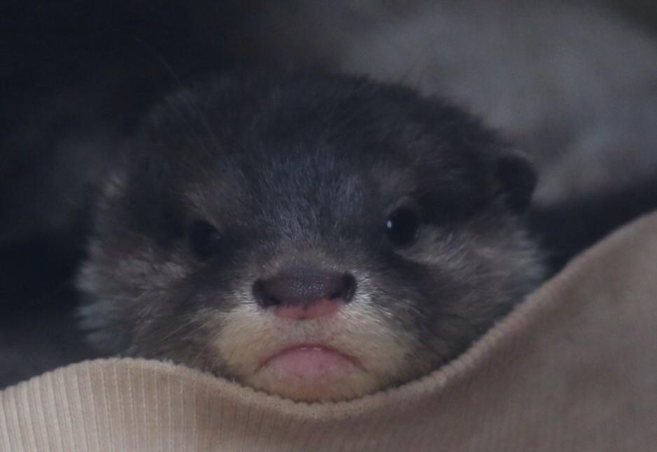 Otter Pup Looks a Little Pouty