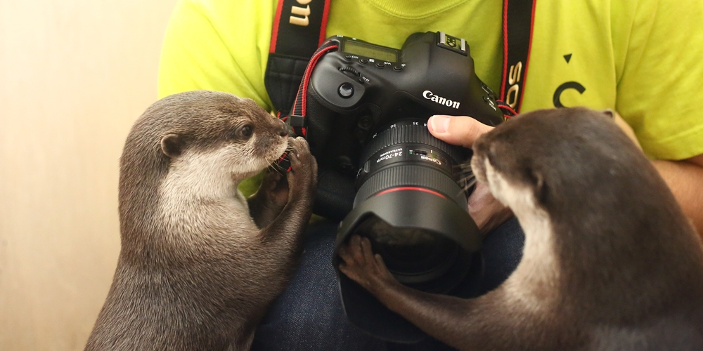 Otters Find Human's Camera Fascinating 1