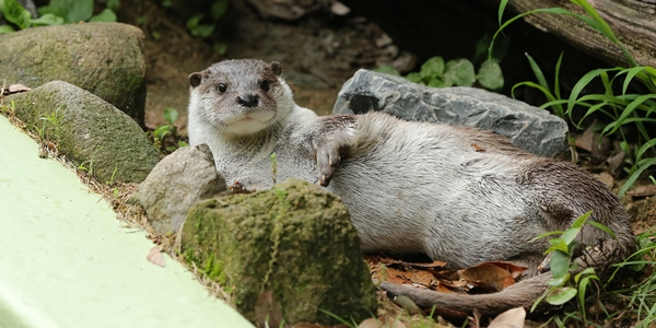 """Draw Me Like One of Your French Otters"""