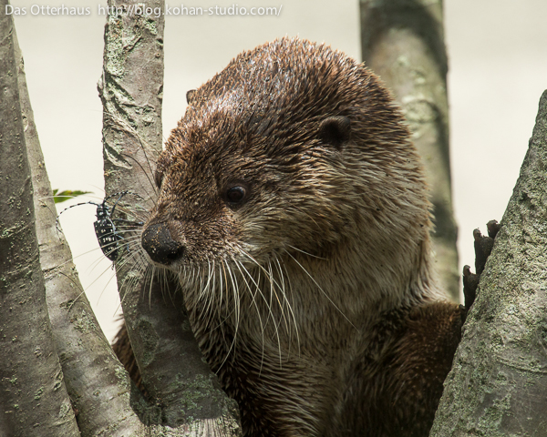 Otter Is Intrigued by a Beetle 1