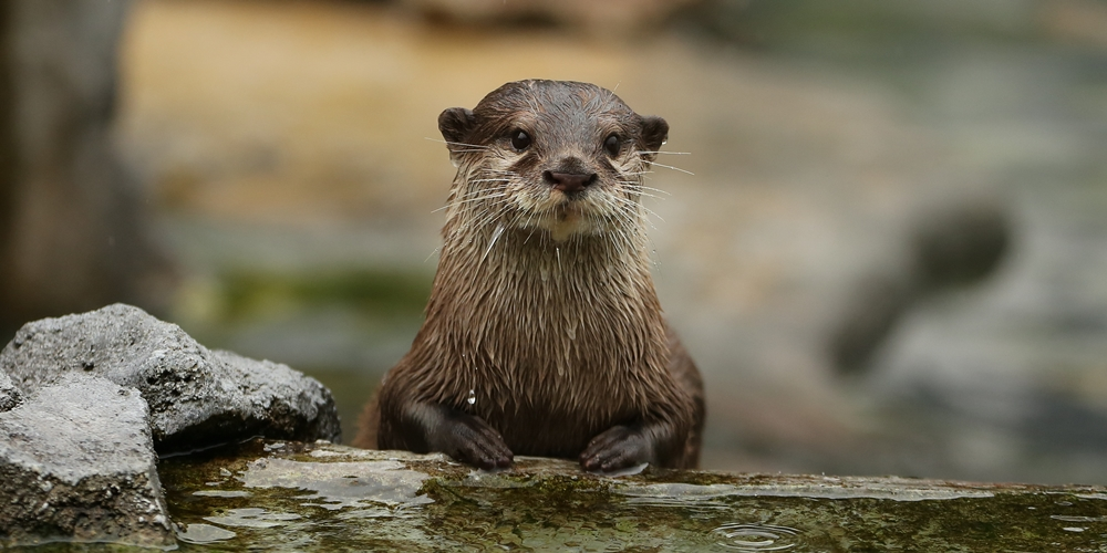Customer Service Otter Will Take the Next Otter in Line