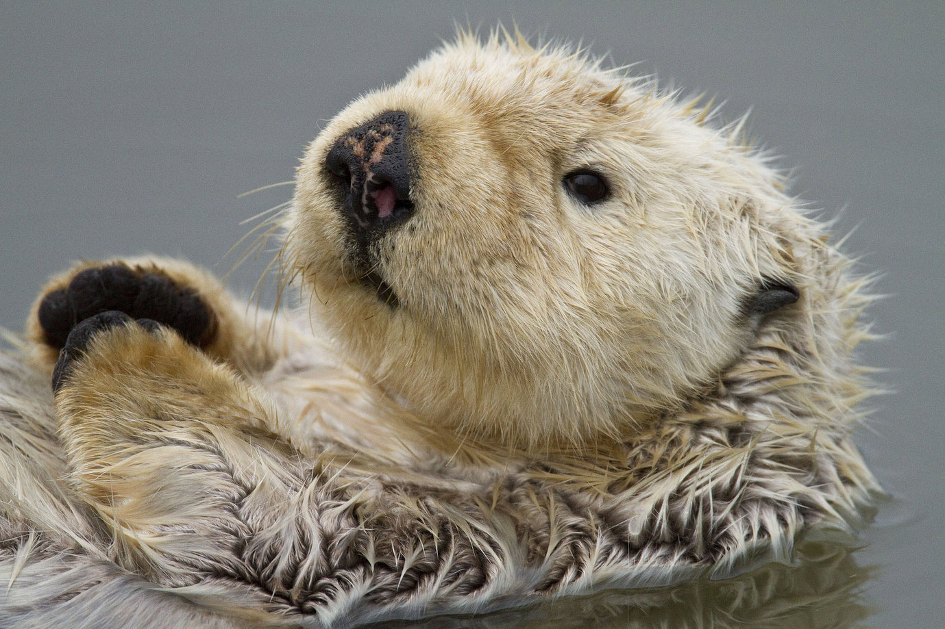 It's the First Day of Sea Otter Awareness Week!