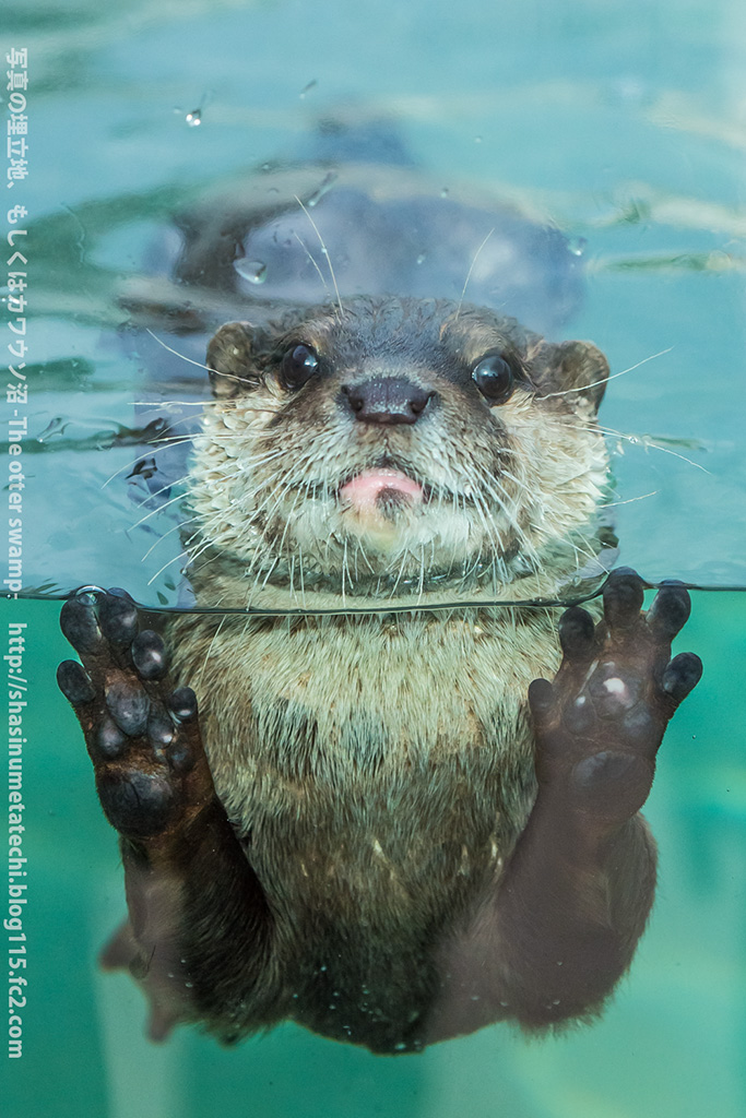 Otter Gets Up Close for a Photo
