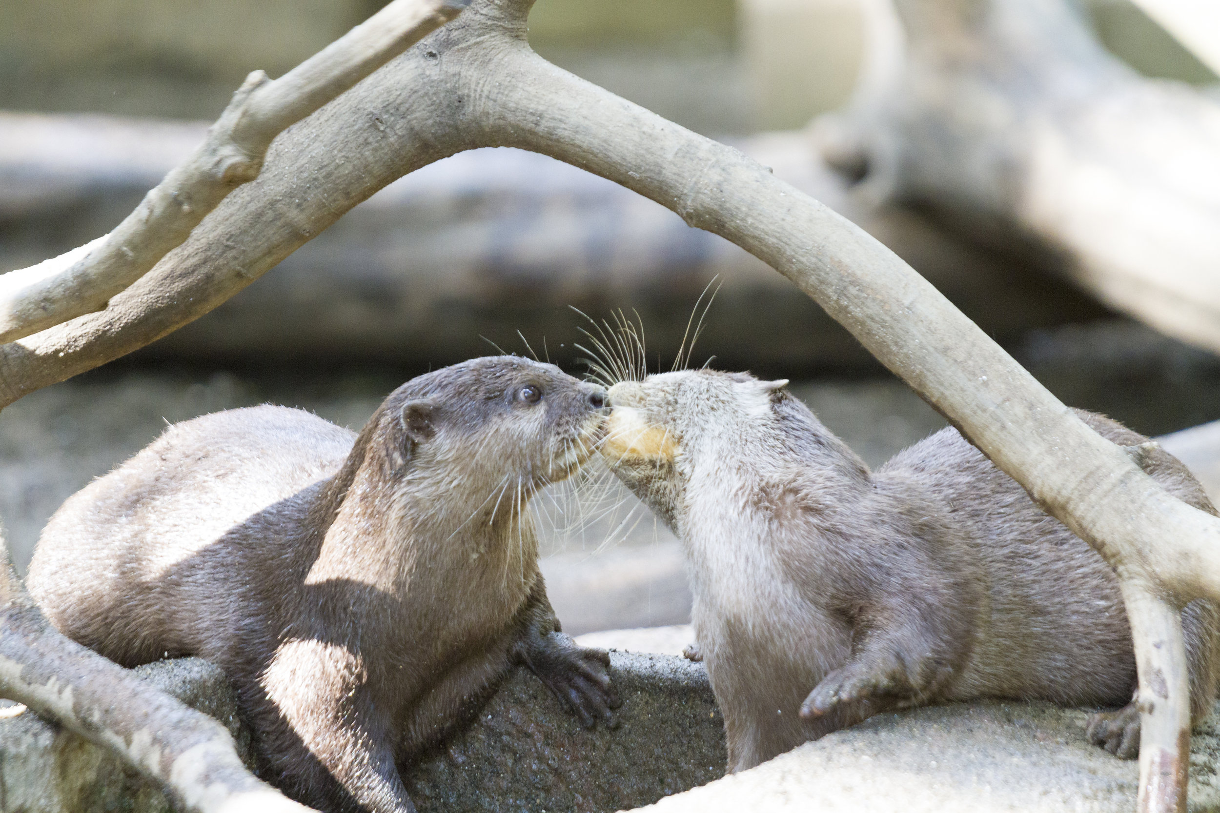 Otter Gets a Surprise Kiss