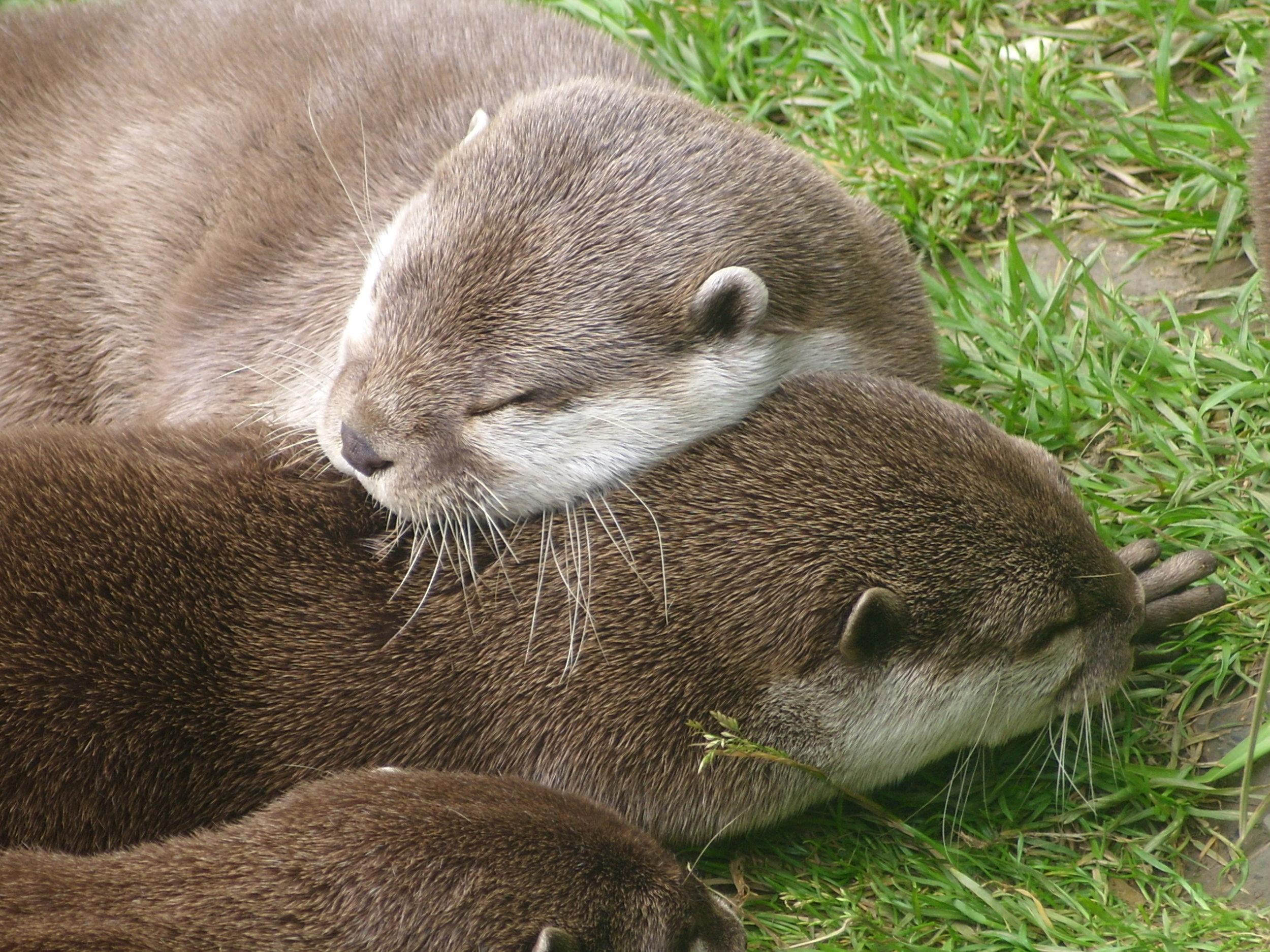 Friends Make the Best Pillows
