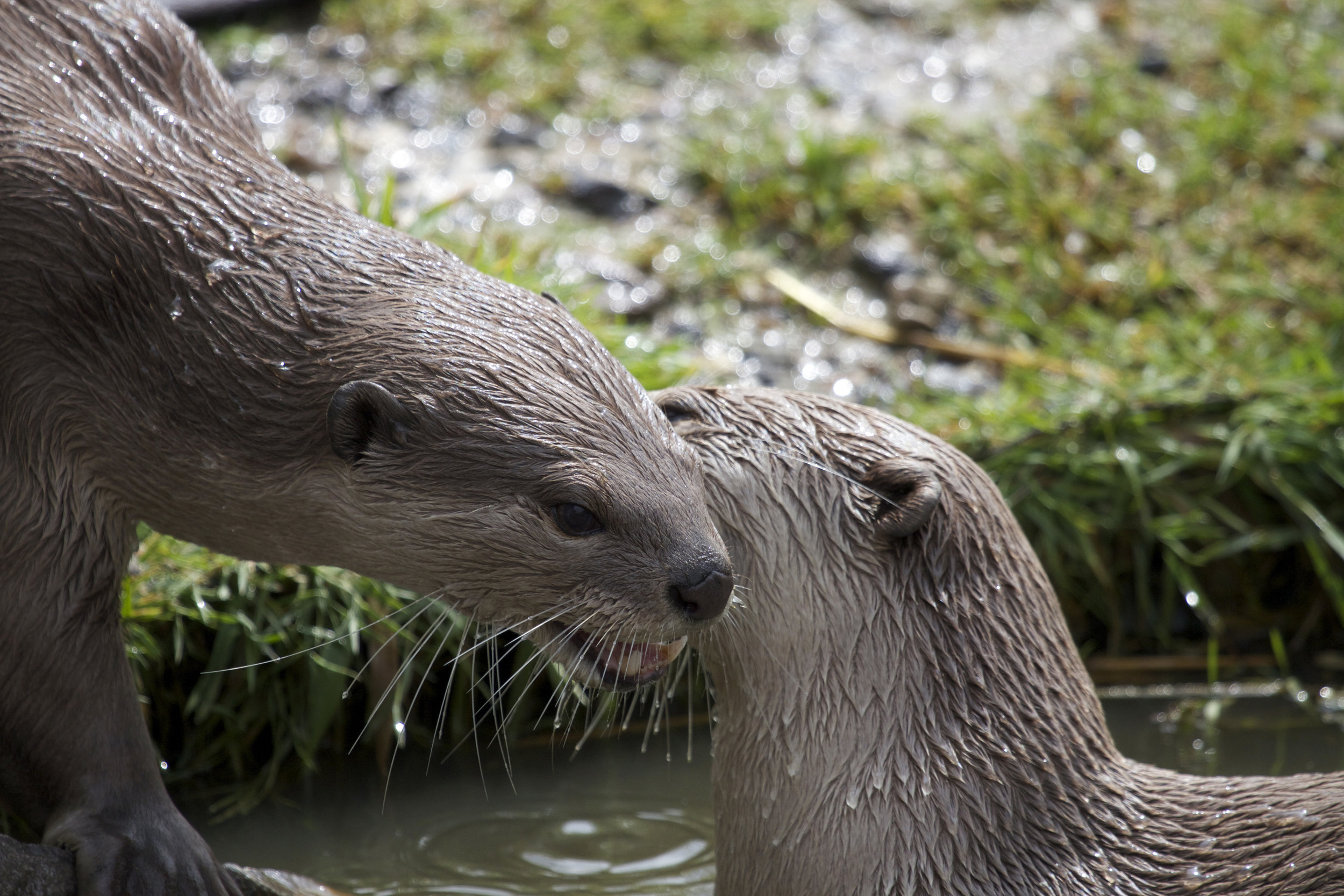 Otters Exchange Secrets