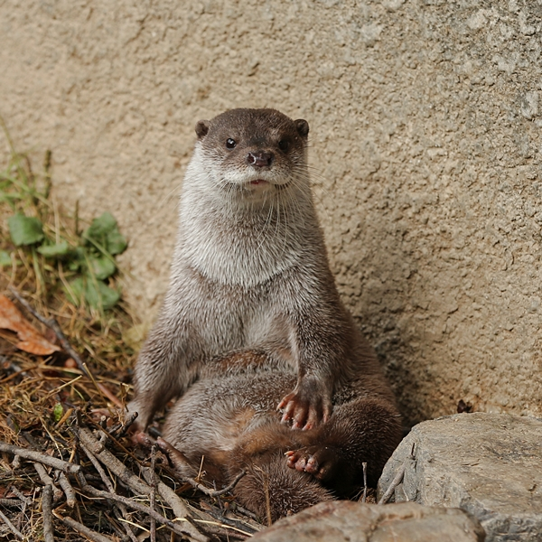 Otter Sits Up Straight for Her Photo to Be Taken