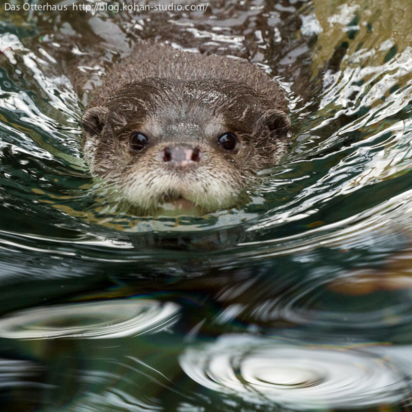 Here Comes Otter, Straight to the Camera