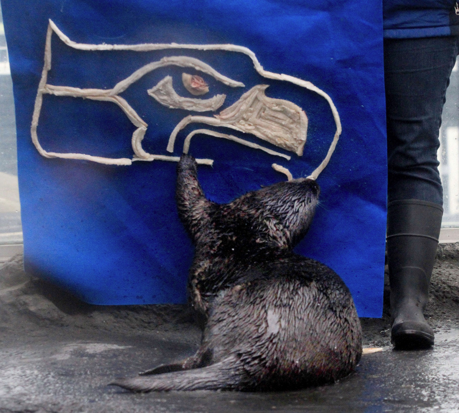Seattle Sea Otter Prepares for Today's Super Bowl by Devouring His Team's Logo
