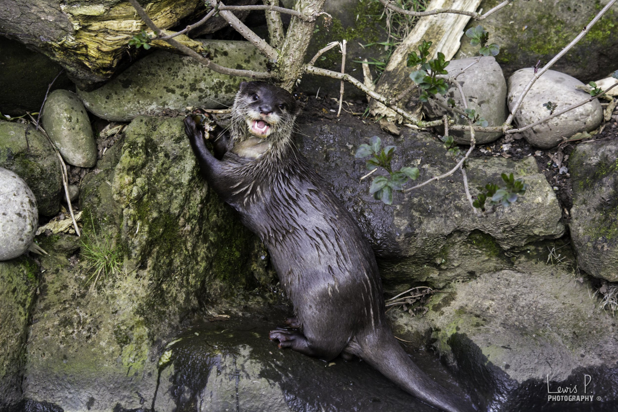 Otter Is Just Delighted to Nom This Snack 2
